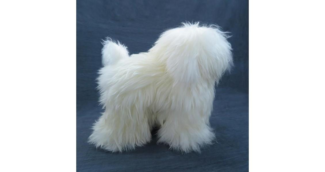 Modeldog